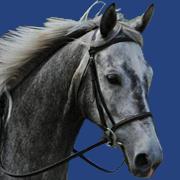Harmony Horse Stables